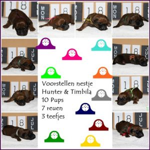 f3cf9ad117-Collage Pups Hunter en Timbila Voorstellen.