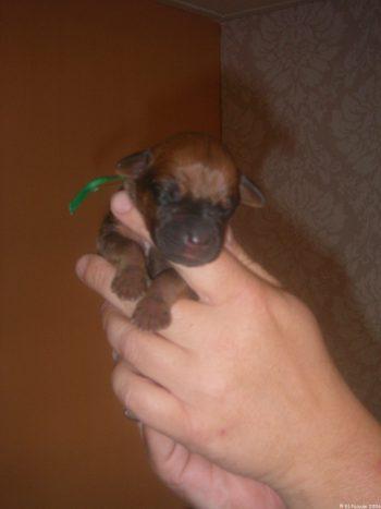 3e pup reu groen eerste dag