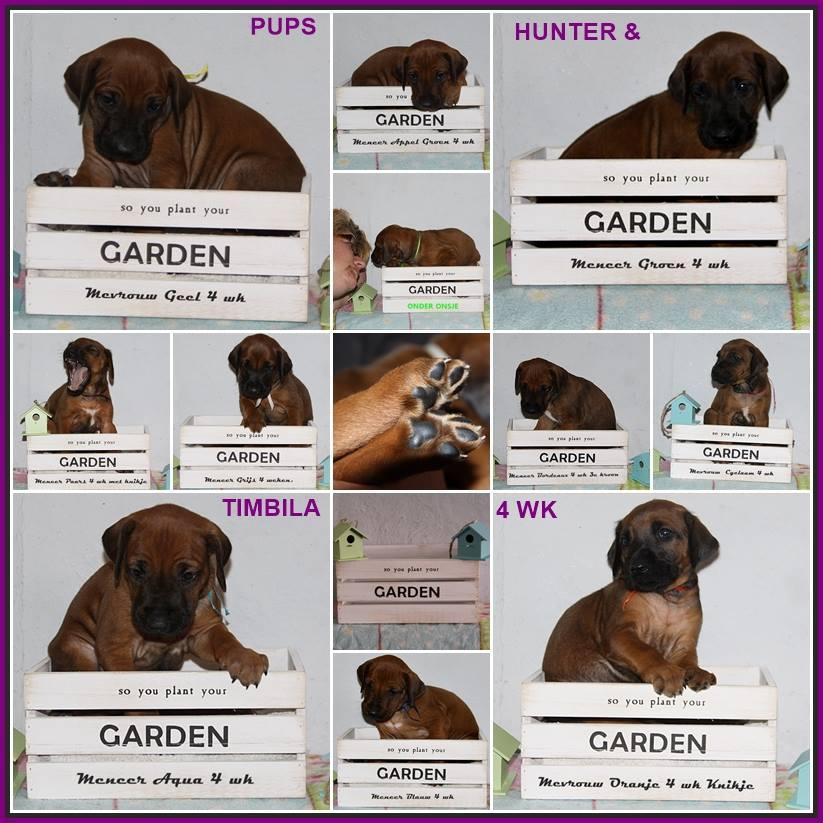 Pups (Week 4)