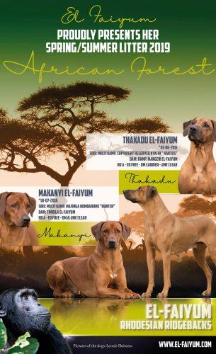 African Forest litter