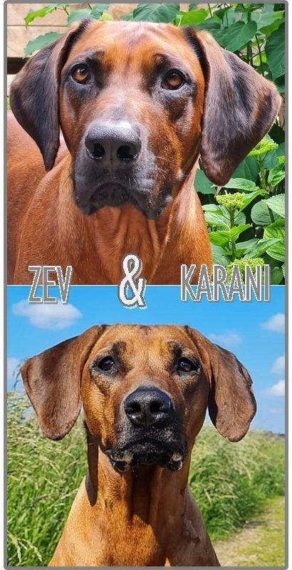 Collage Zev en Karani Website kop