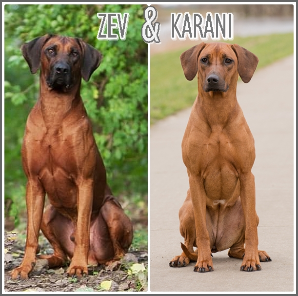 Collage Zev en Karani Website
